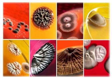 La profiláctica y el tratamiento del hongo de las uñas y los pie